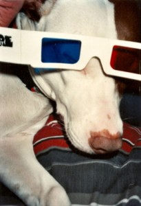 """Dog with 3D glasses,"" photographer unknown, no date. Collection of A. D. Coleman."
