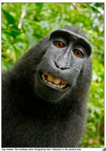 Macaque self-portrait, Indonesia, 2011, as captioned by the London Daily Mail.