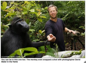 David Slater with macaque, primate photographer unidentified, Indonesia, 2011, as captioned by the London Daily Mail.