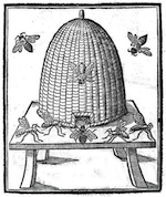 Bees_Bee hive_engraving
