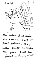 Charles Darwin's evolutionary tree, sketch, 1837