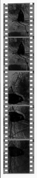 A. D. Coleman, scan of test negative strip, June 10, 2014.