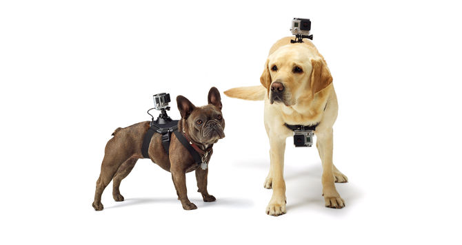 GoPro Fetch harness