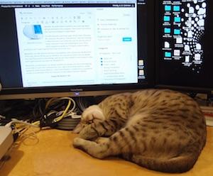 Billie asleep on Allan's desk, December 2014