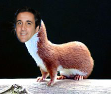 Mustela michaelcohenalis, commonly known as the Trump Weasel