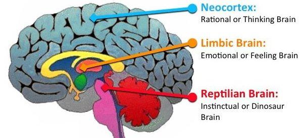 Triune brain, diagram